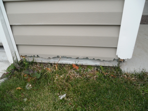 Vinyl Siding with Grass